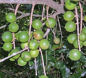 Unusual And Exotic Fruit And Nut Plant Seeds From Around