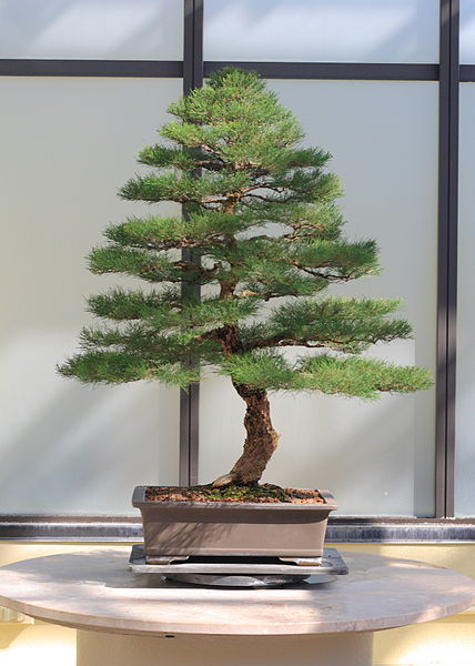 Unusual And Different Seeds For Bonsai Specimens From Around The World