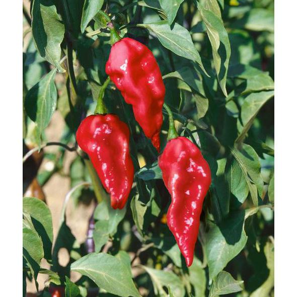 Seedman's Pepper Seed Supply