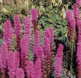 Seeds for unusual cut flower arrangement plants mightylinksfo
