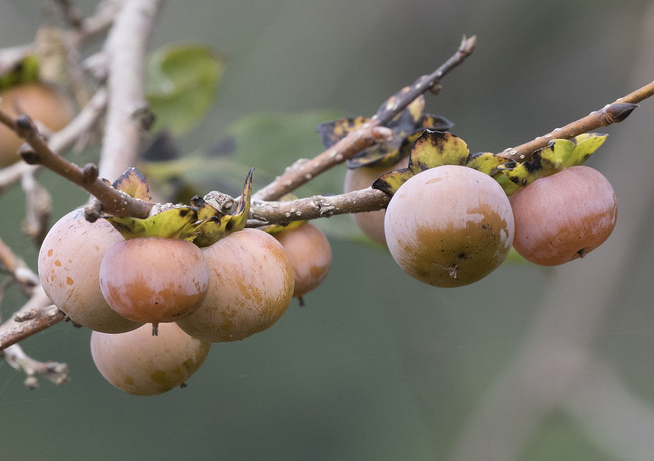 Unusual and exotic fruit and nut plant seeds from around the world image by zeynel cebeci cc by sa 40 from wikimedia commons mightylinksfo