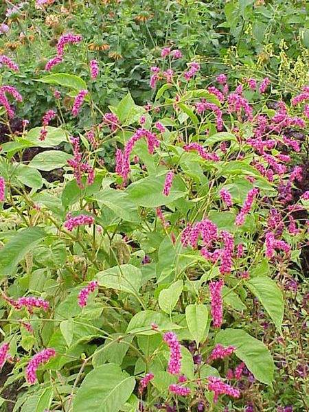 Jim 39 S Favorite Flower Garden Seeds