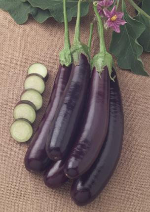 Nb02 Hansel Eggplant
