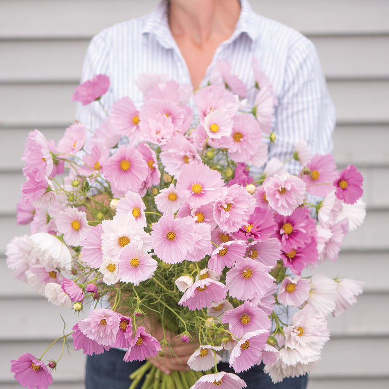 Cosmos flower garden seeds cosmos seed annual mightylinksfo Image collections