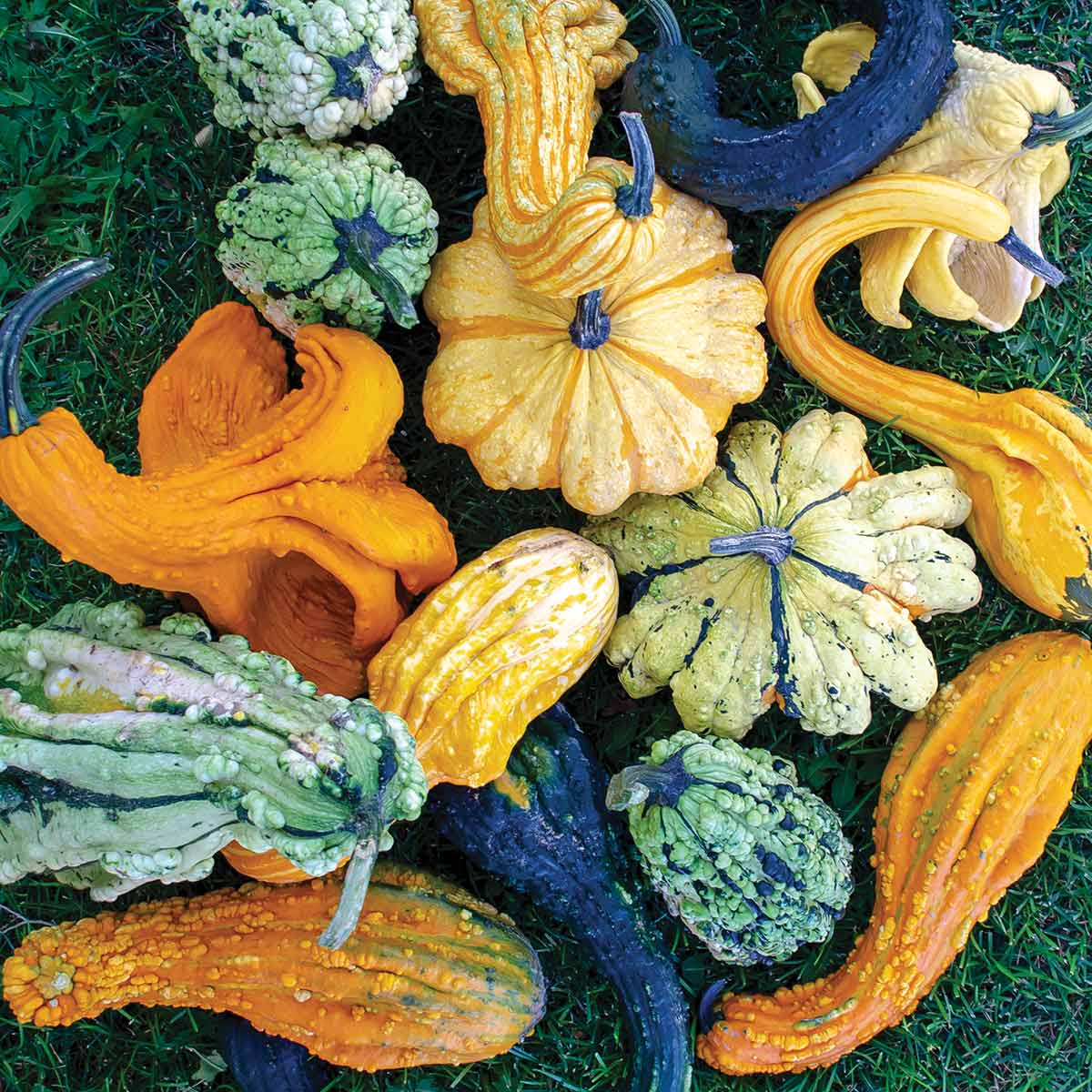 50+SMALL MIXED GOURDS Seeds Hard Shell Type-Crafts Autumn Decoration Baskets