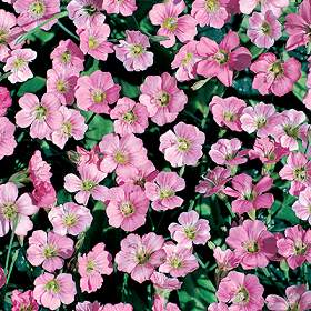 Seeds For Groundcover Plants For The Home Gardener