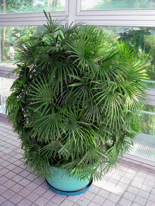Unusual and exotic houseplant seeds from around the world for Unusual small trees