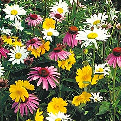 Flower garden seed selections for shady areas mightylinksfo Images