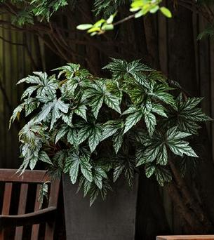 Unusual And Exotic Houseplant Seeds From Around The World: weird plants to grow indoors