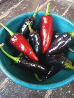 What to do if too much black or hot pepper is used in a dish?