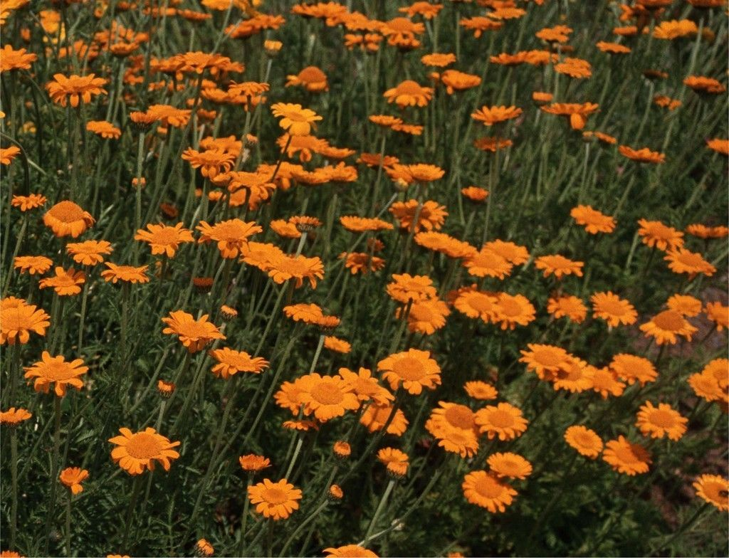 Jim S Favorite Flower Garden Seeds