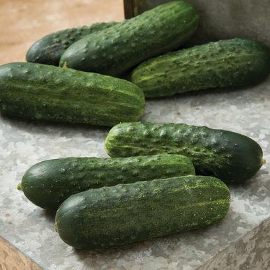 Jim's Favorite Garden Cucumber Vegetable Seeds