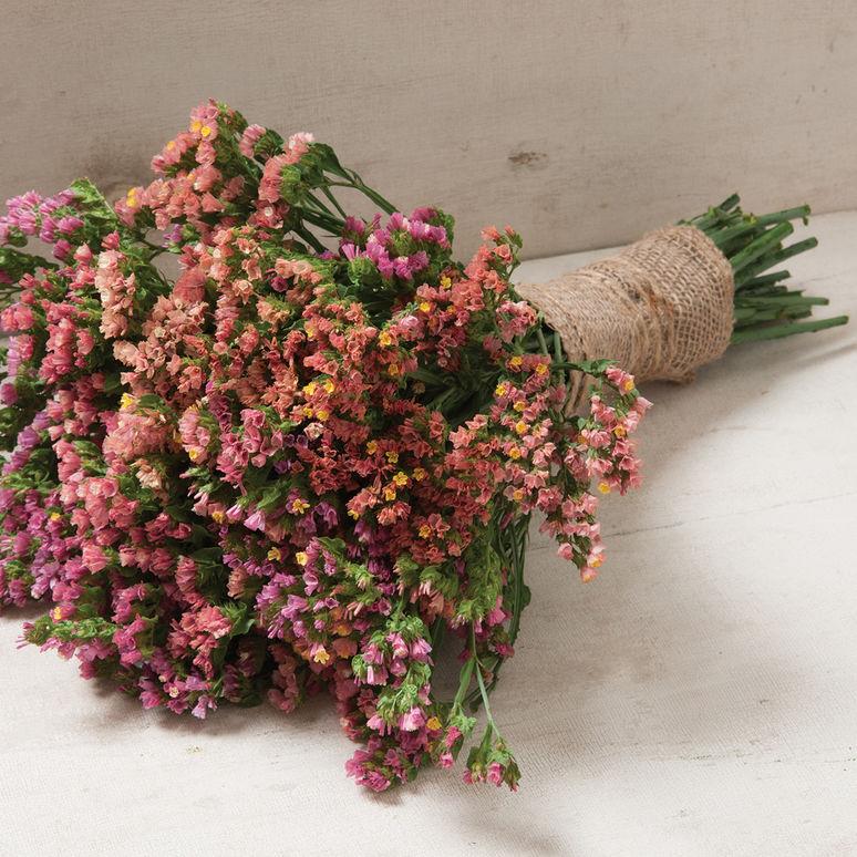 Seeds for Unusual Dry Flower Arrangement Plants