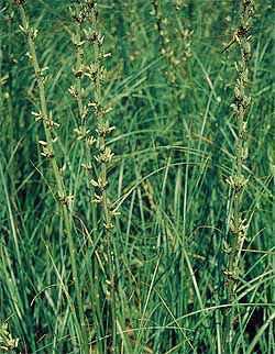 Unusual Medicinal Plant Seeds