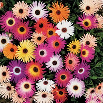 Throw and Grow The Mini Mix 10g Flower Seeds Sow Now!