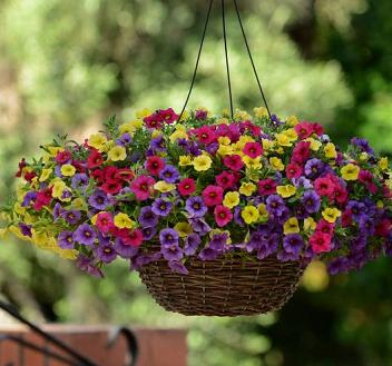 Hanging Basket Patio Container Windowsill Box Plants